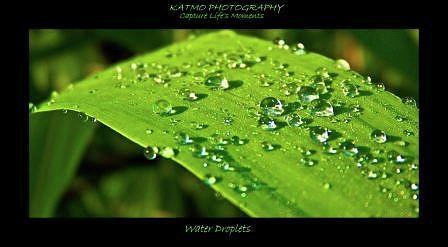 Nature Photograph - Water Droplets by Katlego Mokubyane