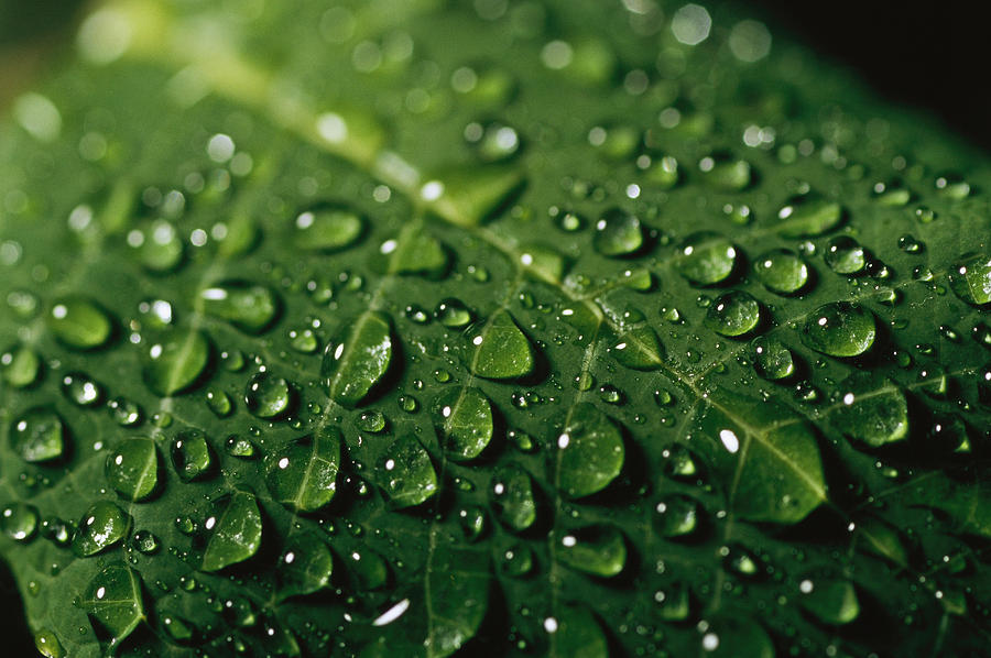 water drops and droplets on a leaf photograph by taylor s kennedy