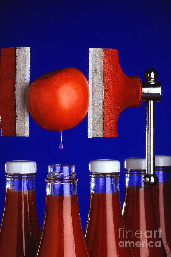 Tomato Photograph - Water Extraction From Tomato by Photo Researchers
