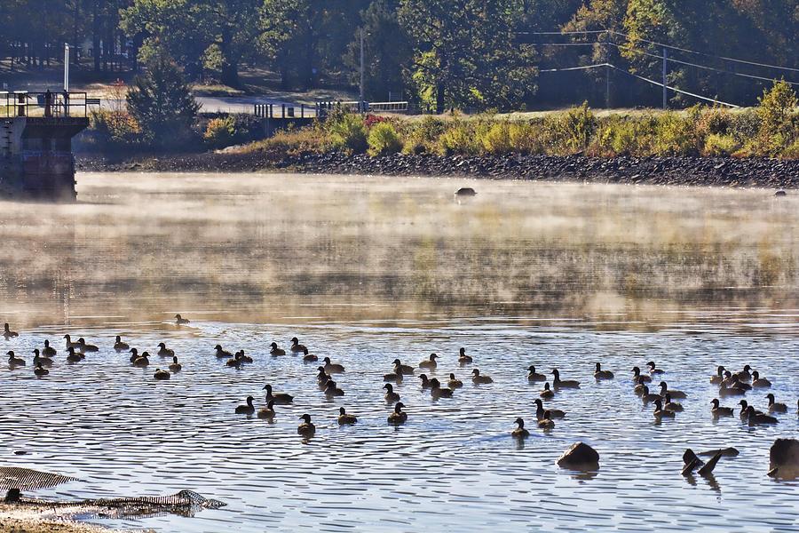 Water Fowl Photograph - Water Fowl At Lake Wilhelmina Arkansas by Douglas Barnard