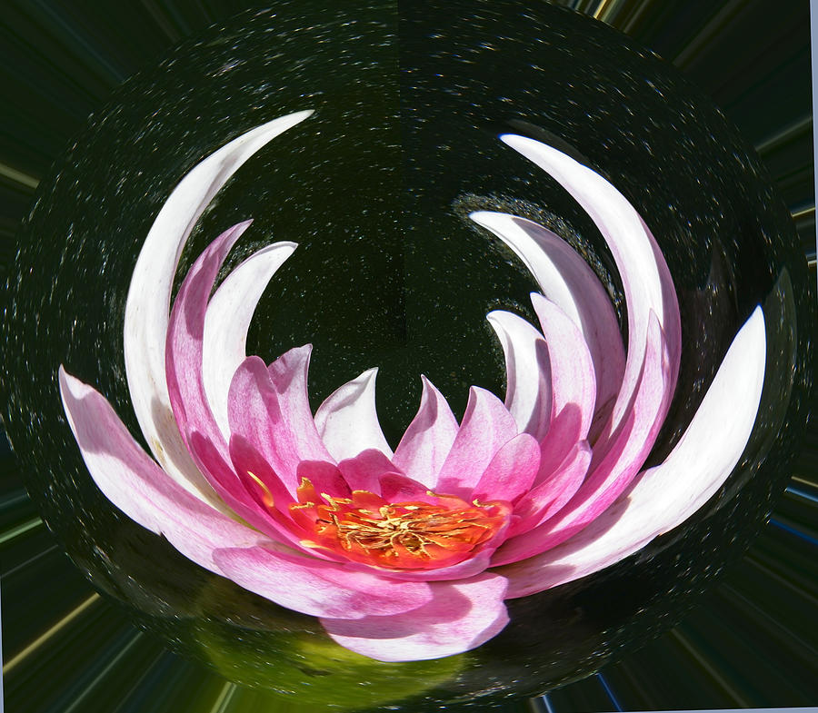 Water Photograph - Water Lily Enters Nirvana by Mary Sedivy
