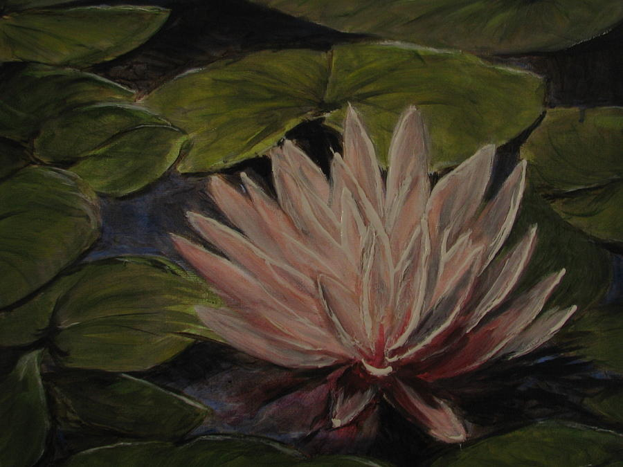 Water Lily Painting - Water Lily by Sherry Robinson