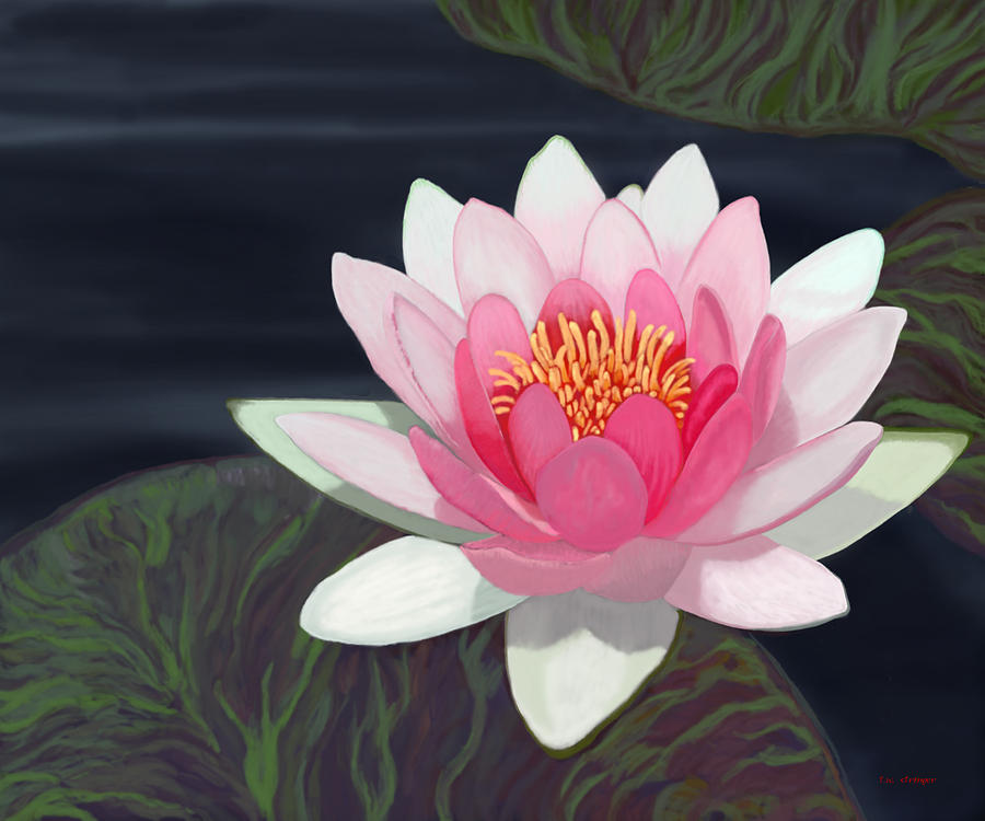 Pond Painting - Water Lily by Tim Stringer