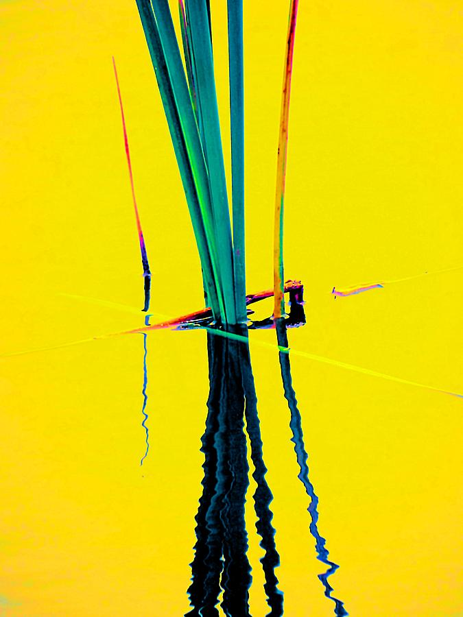 Botanical Photograph - Water Reed Reflections  by Beth Akerman