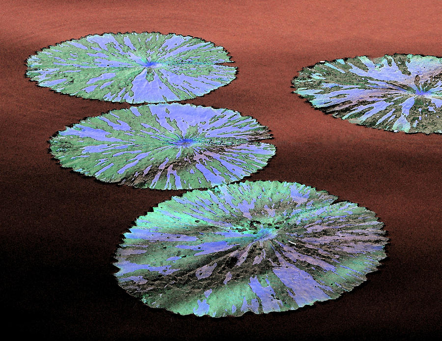 Water Lily Pods Mixed Media - Watercolor Blue by Rosalie Scanlon