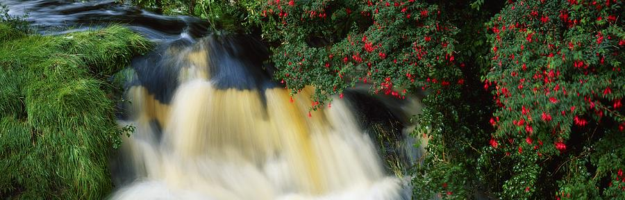 Fuschia Photograph - Waterfall And Fuschia, Ireland by The Irish Image Collection