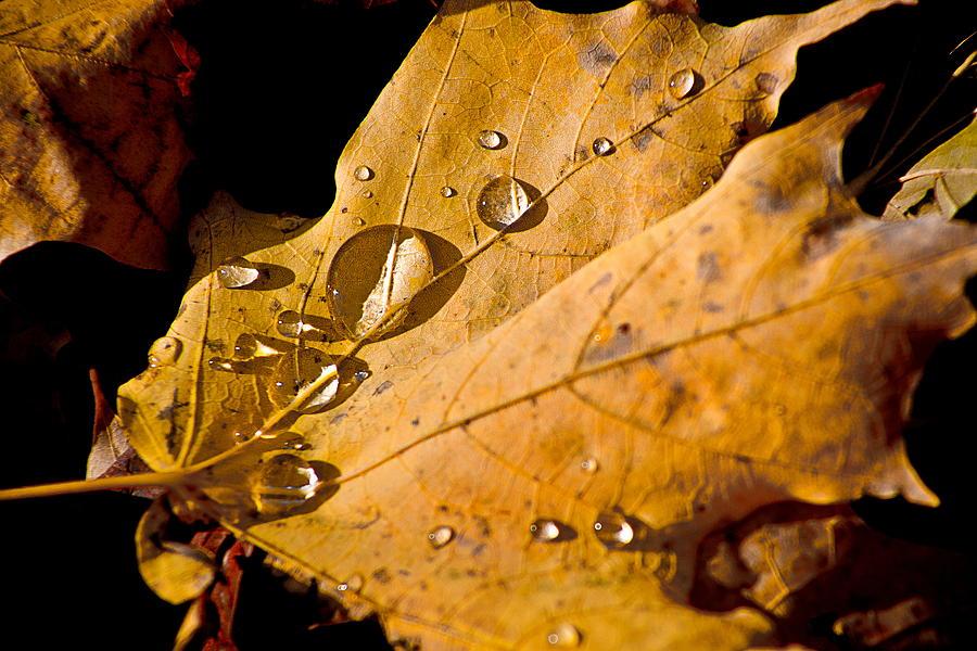 Fall Photograph - Waterfall by Burney Lieberman