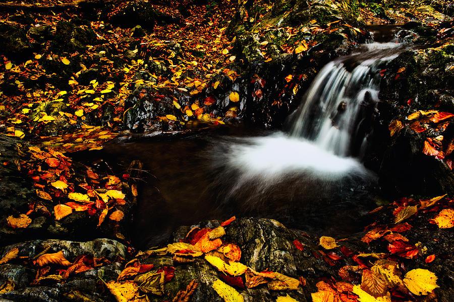 Nature Photograph - Waterfall by Irinel Cirlanaru