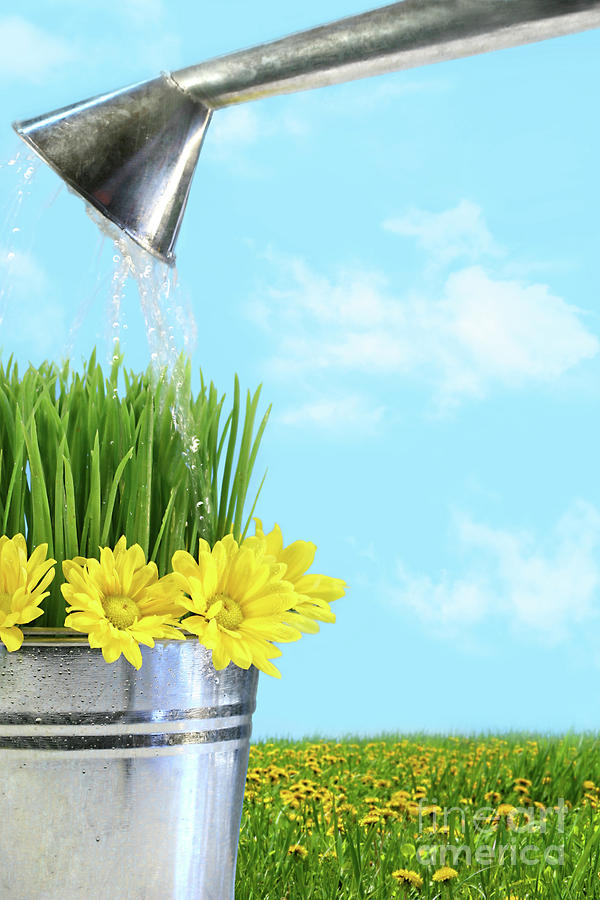 Beautiful Photograph - Watering Flowers And Grass For Spring by Sandra Cunningham