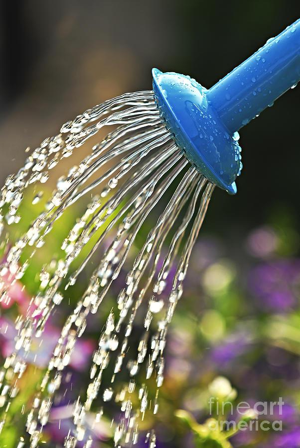 Water Photograph - Watering flowers by Elena Elisseeva
