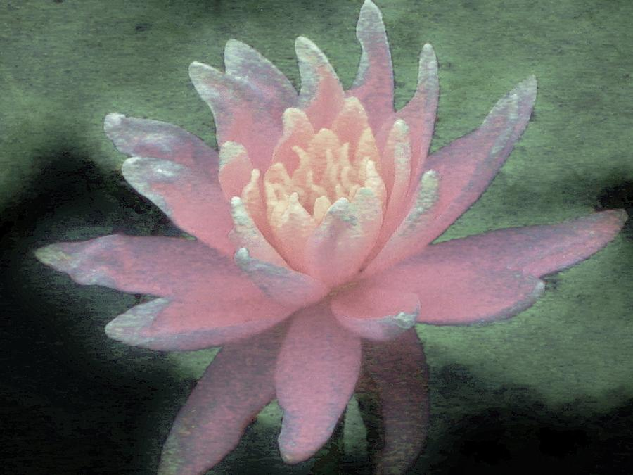 Floral Photograph - Waterlily One by Margaret Bobb