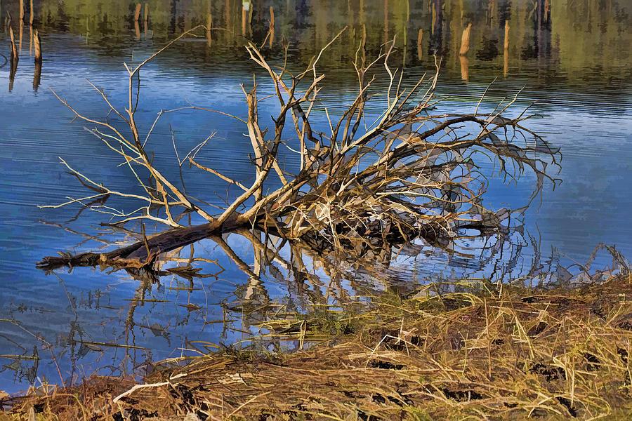 Waterlogged Tree. Tree Photograph - Waterlogged Tree by Douglas Barnard