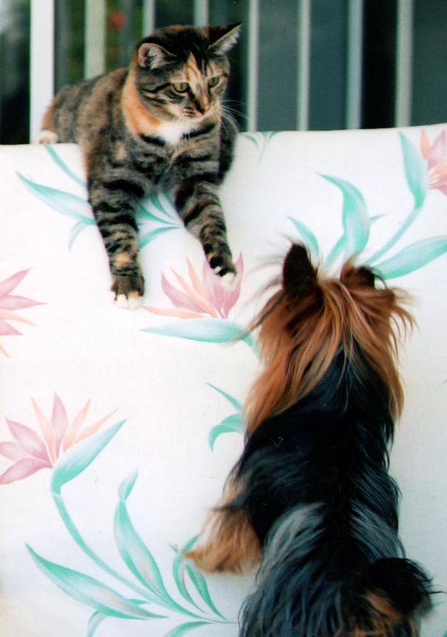 Cat Photograph - We Can Talk This Over... by Tanya Tanski