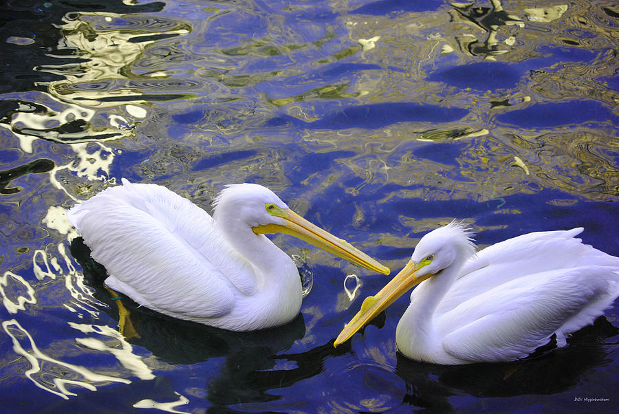 Pelican Photograph - We Share A Heart by DiDi Higginbotham