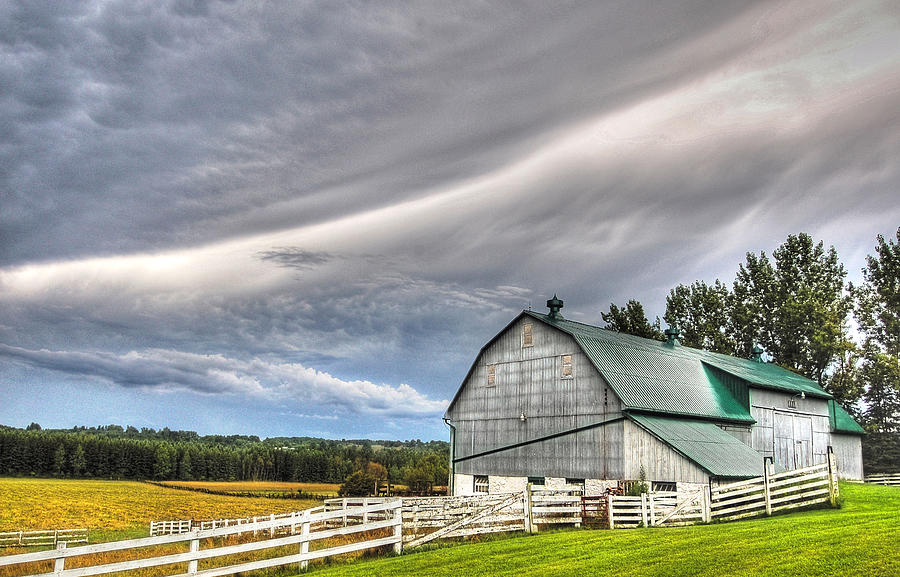 Farm Photograph - Weather It Out by Bruce Kenny