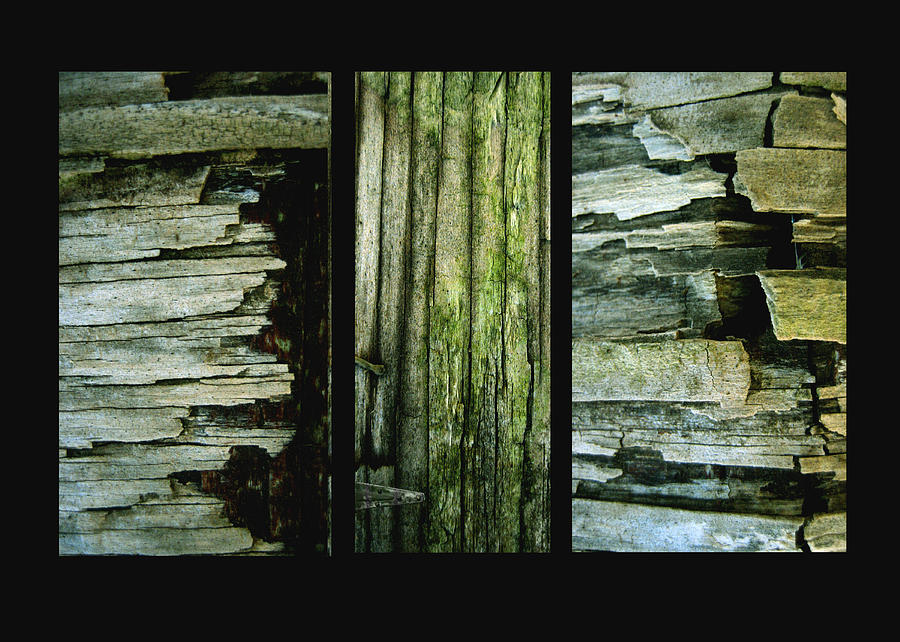 Weathered Wood Photograph - Weathered by Ann Powell