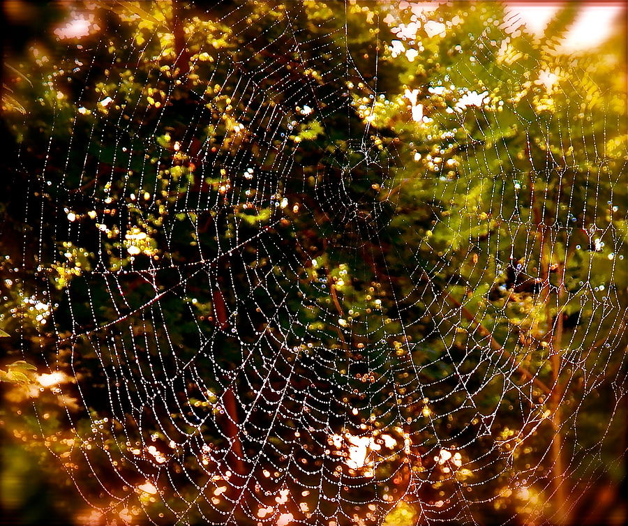 Web Illusion Photograph by Gloria Warren