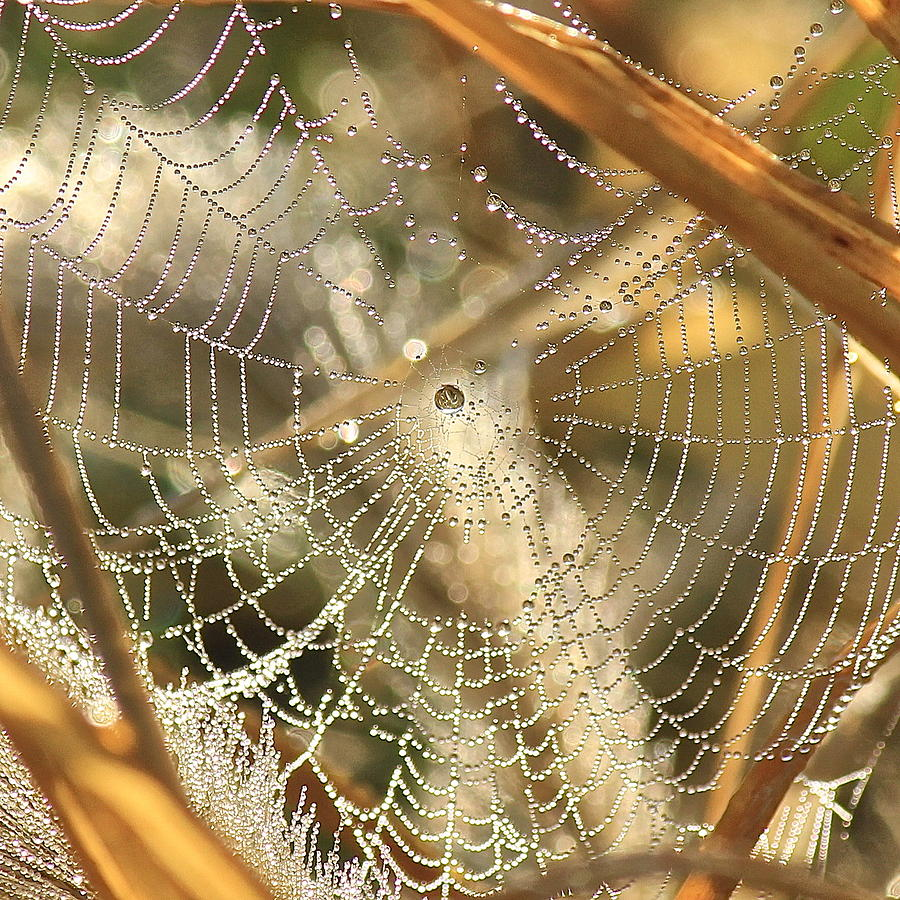 Web Photograph - Web Of Jewels by Penny Meyers