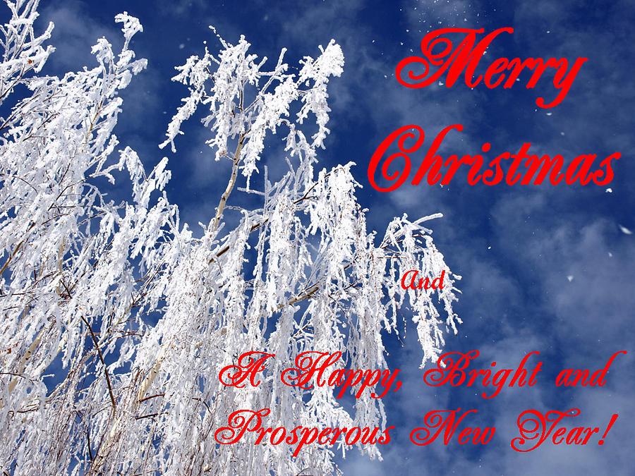 Christmas Photograph - Weeping Willow Christmas by DeeLon Merritt