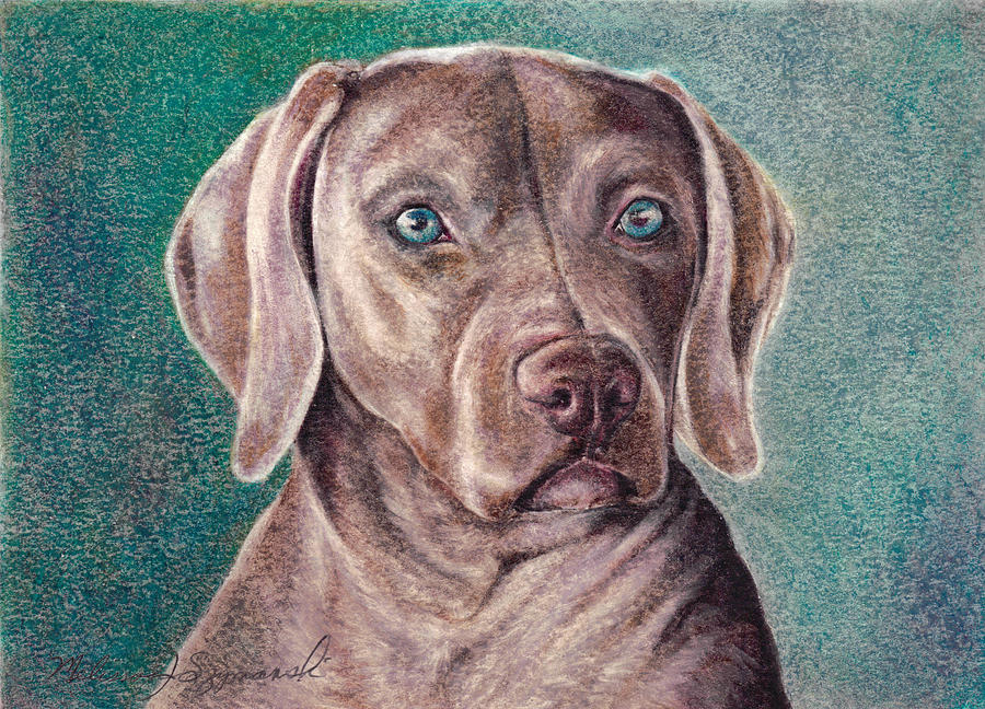 K9 Drawing - Weimer-rhymer by Melissa J Szymanski