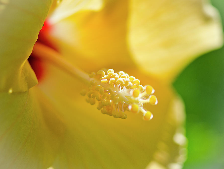 Yellow Photograph - Welcome The Light by Jessica Brooks
