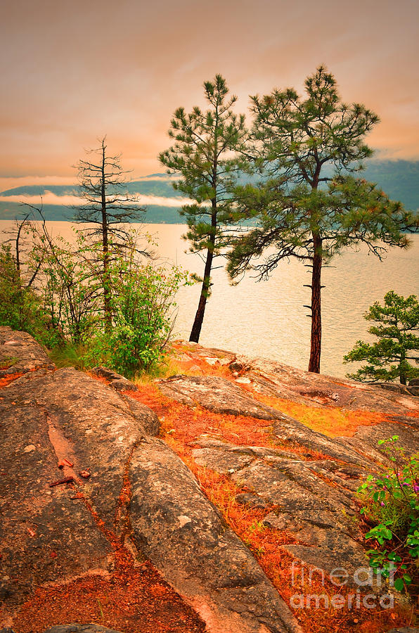 Trees Photograph - Welcoming The Morning by Tara Turner