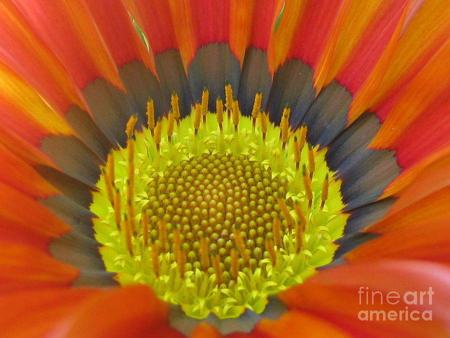 Flower Photograph - Well-disposed by Tina Marie
