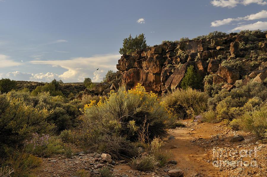 Landscape Photograph - Westward Across The Mesa by Ron Cline