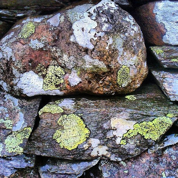 Dry Stone Wall Photograph - Wet Dry Stone Wall by Nic Squirrell