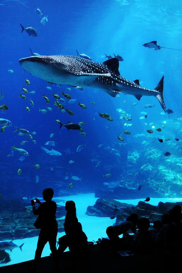 Aquarium Photograph - Whale Shark Fly-by by Brian M Lumley