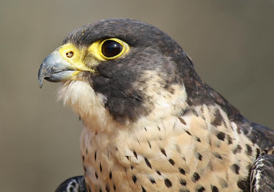 Birds Photograph - What A Beauty by Paulette Thomas
