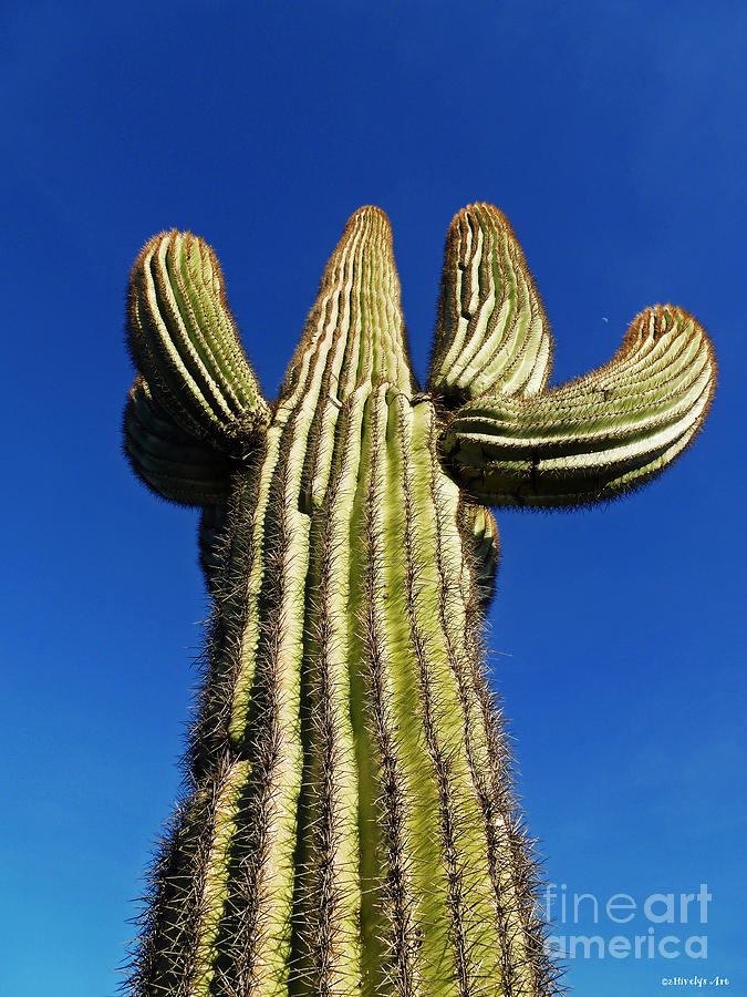 What A Big Cactus Photograph By Methune Hively