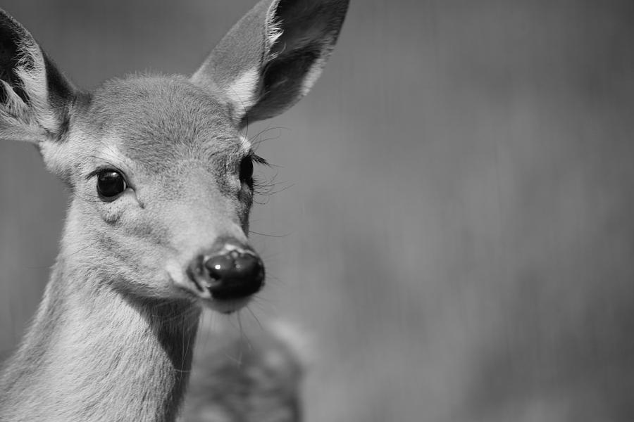 Deer Photograph - What A Face by Karol Livote