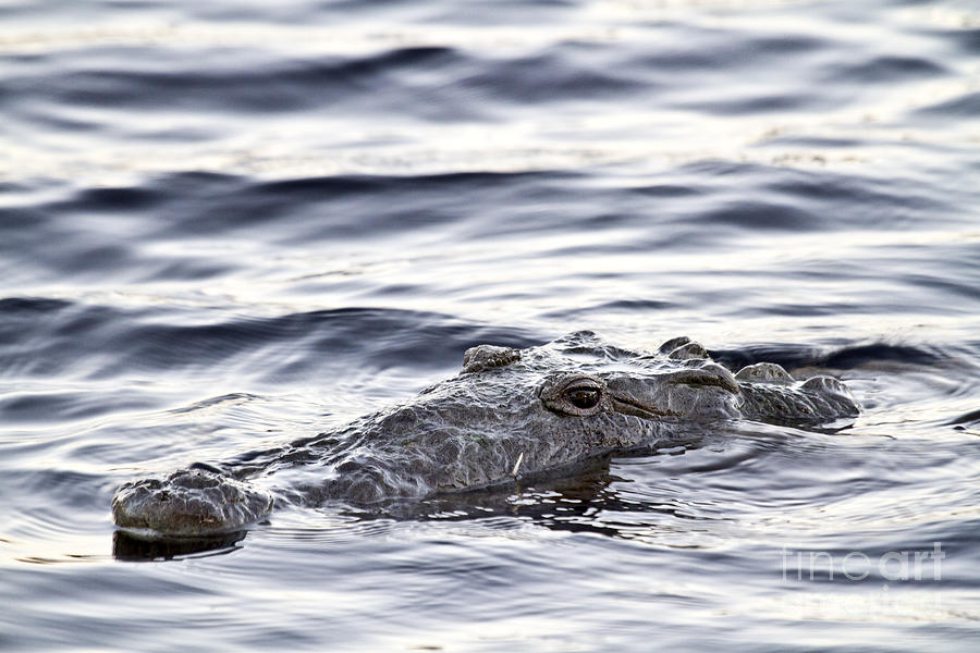 Crocodile Photograph - What I See by Rodney Cammauf