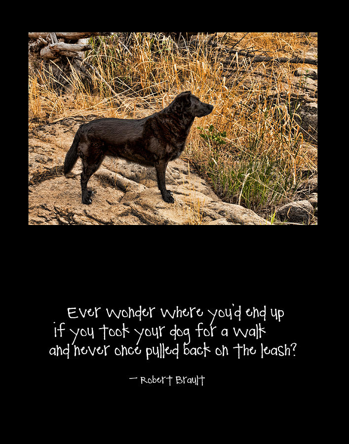 Black Lab Photograph - What If by Bonnie Bruno