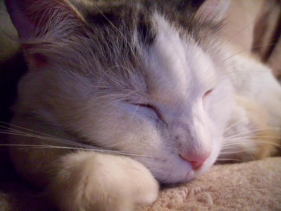 Cat Photograph - What Is A Cat by Ginny Schmidt
