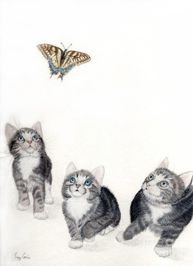 Silver Tabby Kitten Drawing - What Is That by Peggy Covic