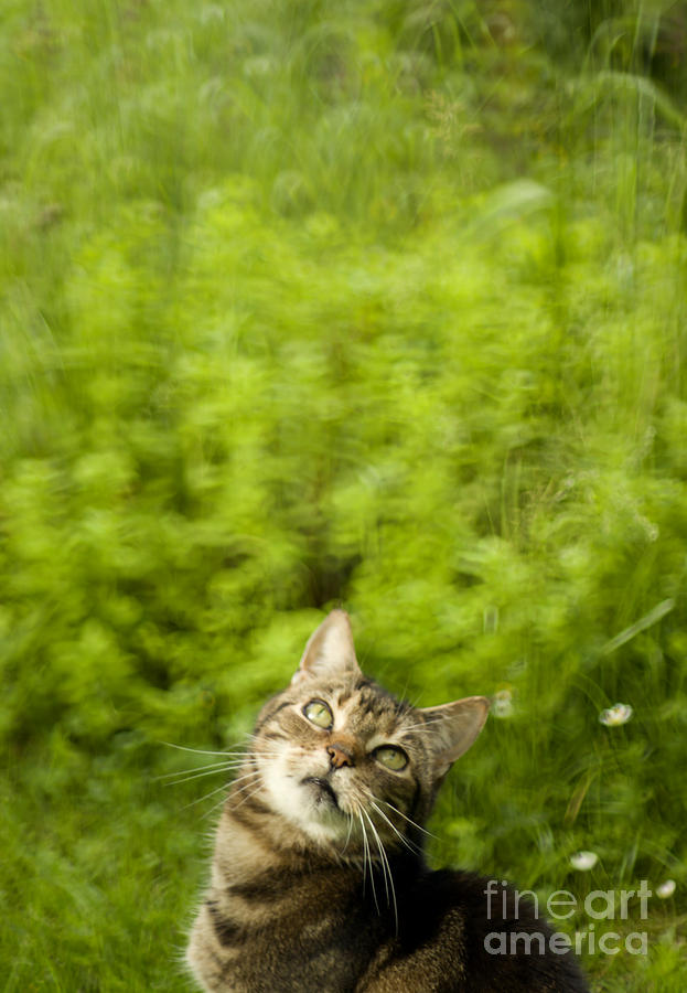 Cat Photograph - What Is Up There by Angel  Tarantella