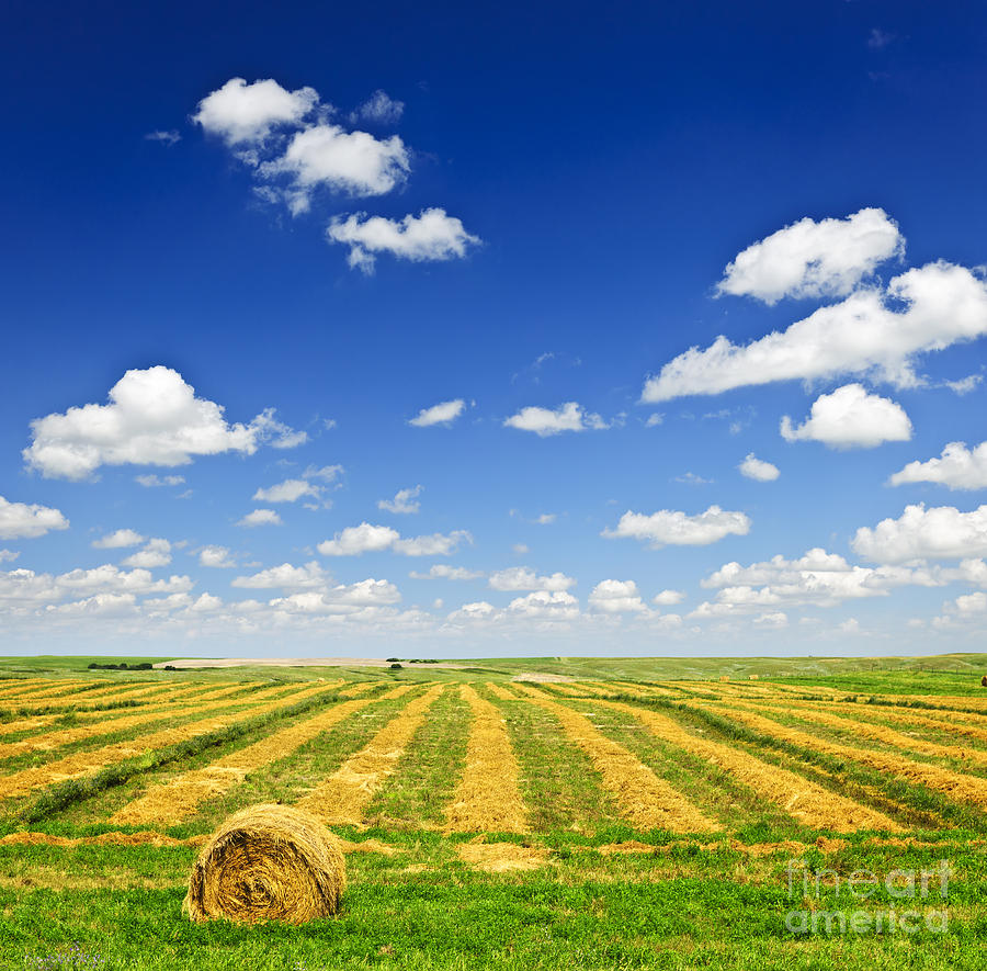 Wheat Farm Field At Harvest Photograph