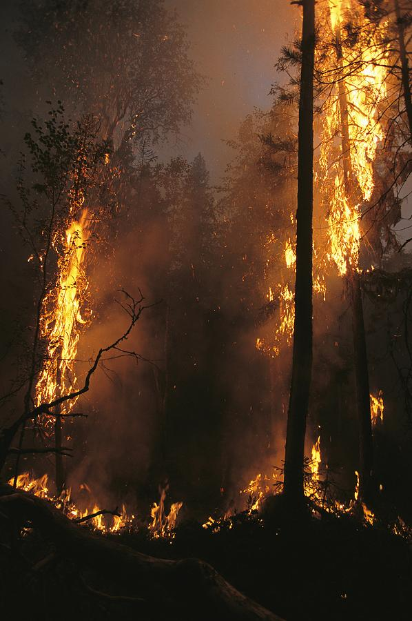 Fires Photograph - When Flames Crown Into Treetops by Mark Thiessen