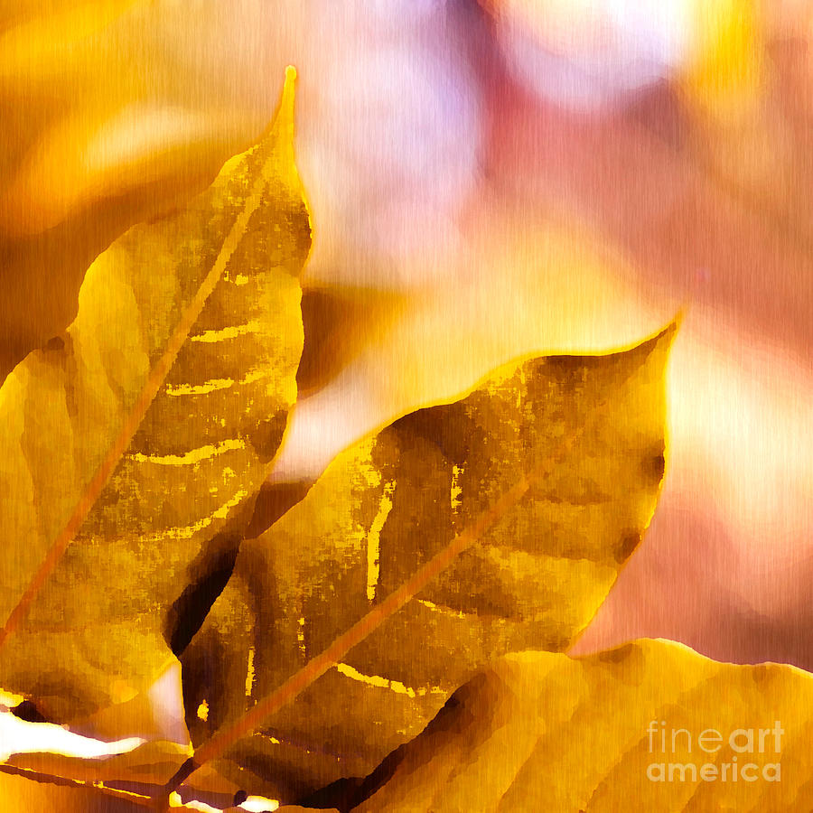 Fall Drawing - When Leaves Turn Gold by Artist and Photographer Laura Wrede