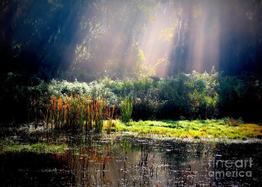 Marsh Photograph - When Morning Hits The Marsh by Carol Groenen