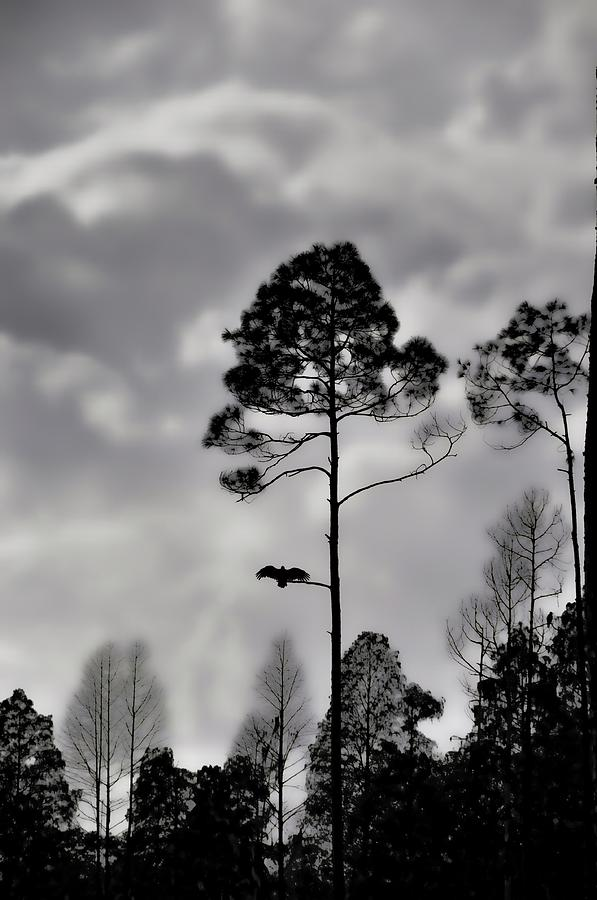 Landscapes Photograph - When The Air Gets Too Thin by Jan Amiss Photography