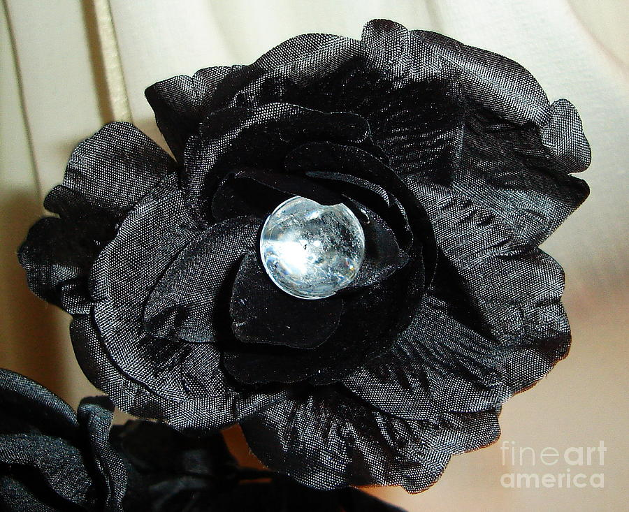 Black Rose Photograph - Where Are You  by Jozy Me