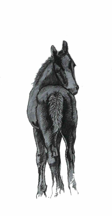 Horse Drawing - Where Are You by Patricia Barmatz