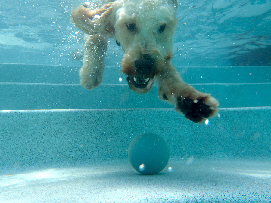 Dog Photograph - Where Is My Ball by Juan Pisani
