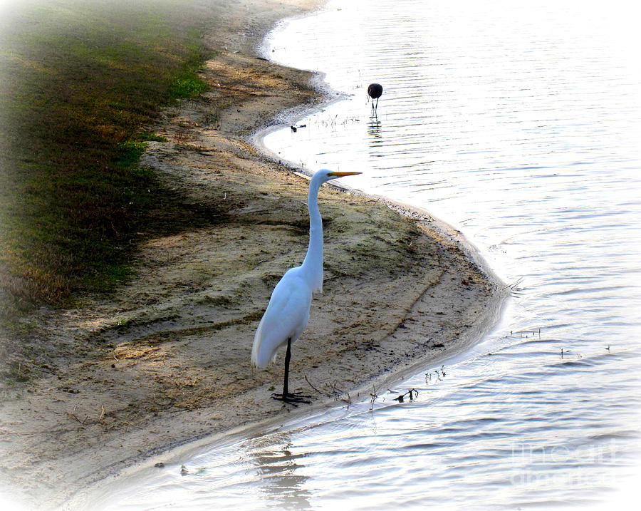 White Photograph - Where The Herons Meet by Susanne Van Hulst