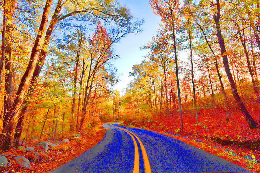 Talemina Scenic Drive Arkansas Photograph - Where The Road Snakes by Douglas Barnard