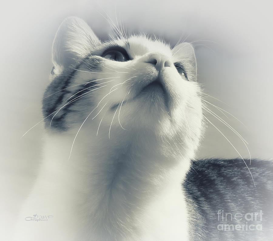 Photo Photograph - Whiskers by Jutta Maria Pusl