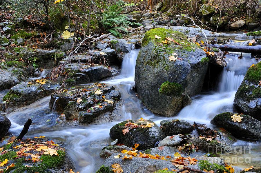 Autumn Photograph - Whisketown Stream In Autumn by Gary Whitton